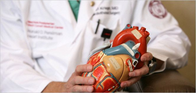 Physician holds a plastic model of a heart.